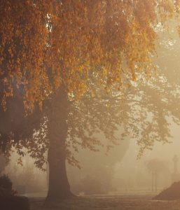 Friedhof Herbstbaum